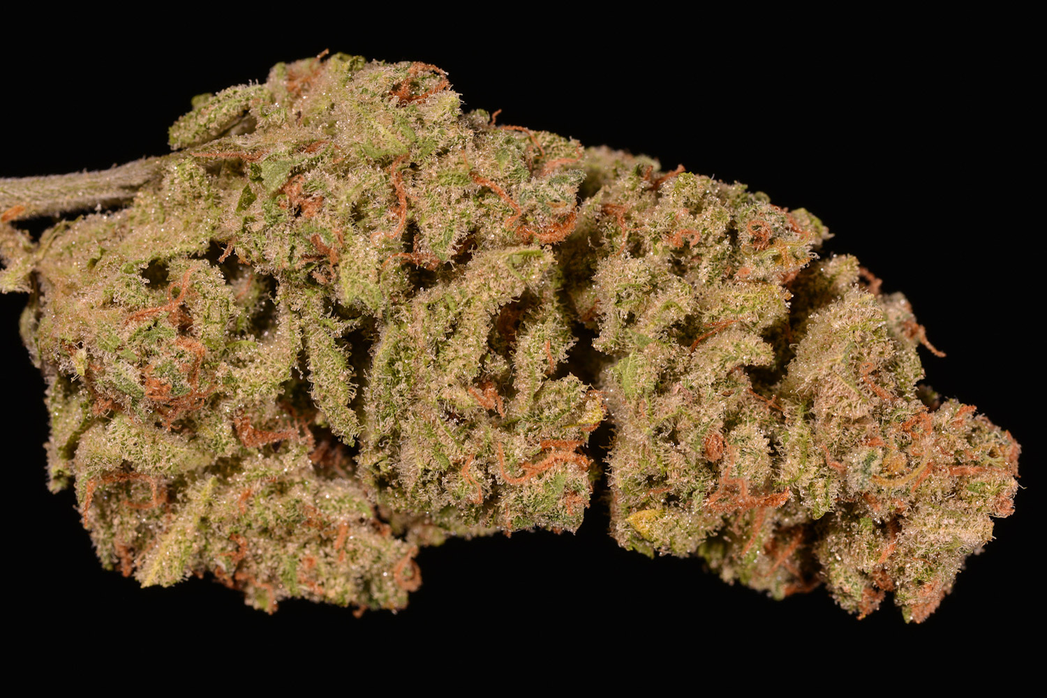 Green Crack (marijuana review, Strain Theory)