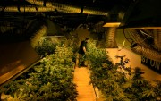 What is marijuana industry doing to reduce carbon footprint?