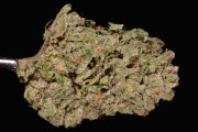 aspen-OG-strain-marijuana-review-the-cannabist