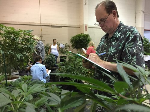 "Ed Rosenthal, nicknamed the ""Ganja Guru,"" judges marijuana plants at a competition designed to select nine specimens for display at the Oregon State Fair. The exhibit of live marijuana plants will run from Aug. 26 to Sept. 5 and will be the first time real pot plants have been open for public viewing at the annual agricultural showcase. (Gillian Flaccus, The Associated Press)"